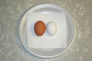 Martin Luther King, Jr. , brown egg and white egg