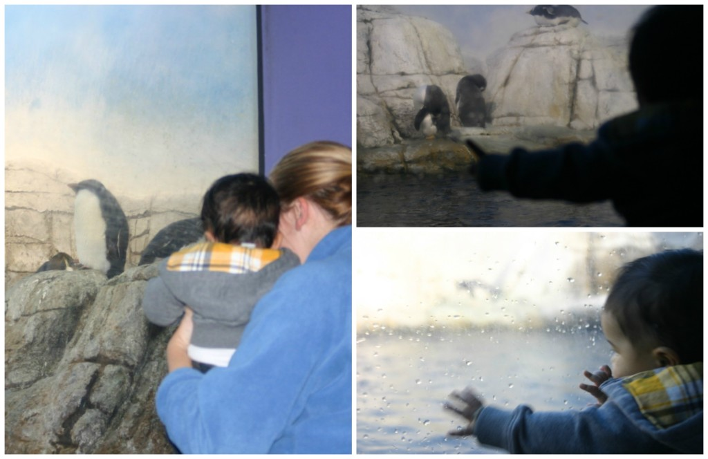 Christmas at the Indianapolis Zoo: Checking out the Penguins