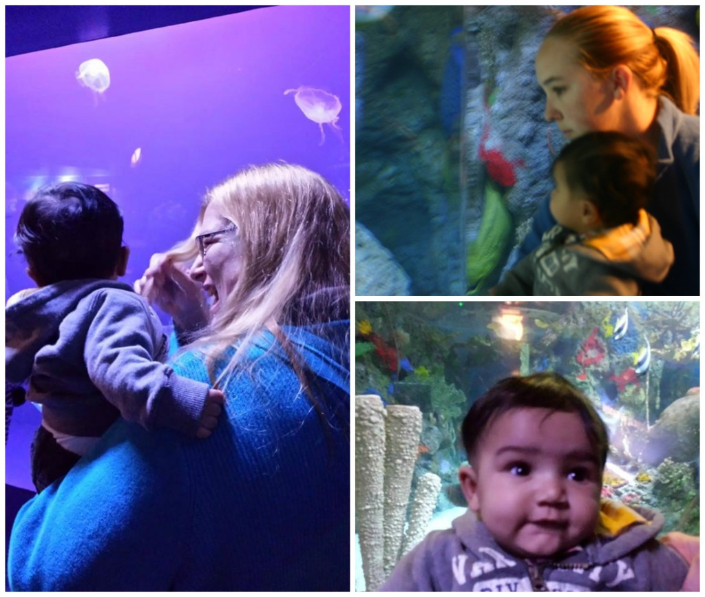 Christmas at the Indianapolis Zoo:  Oceans Exhibit
