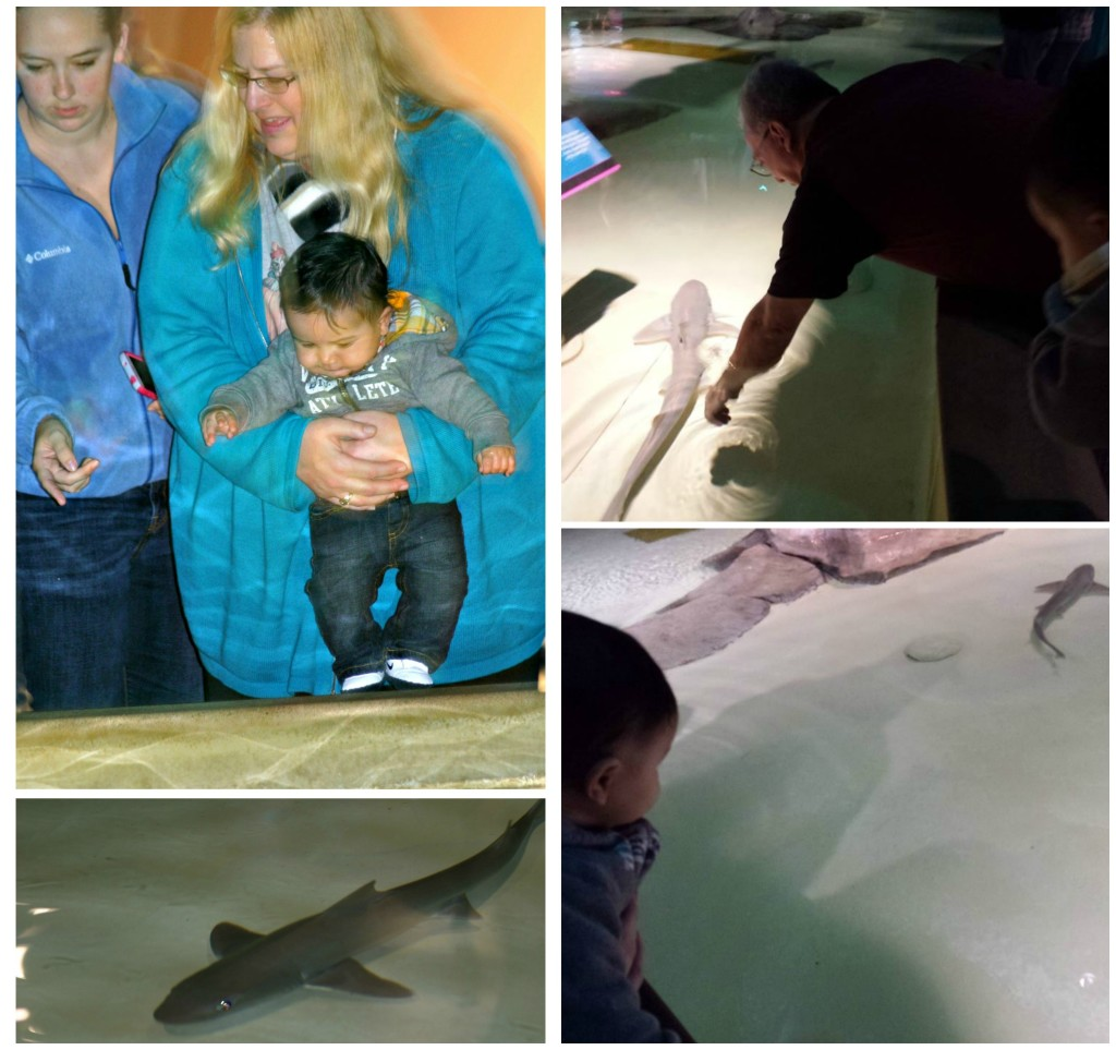 Christmas at the Indianapolis Zoo, Petting Sharks