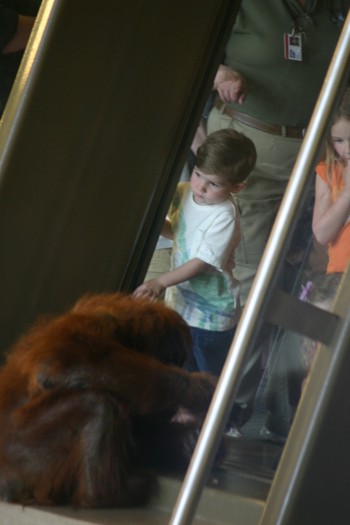 The Simon Skjodt International Orangutan Center