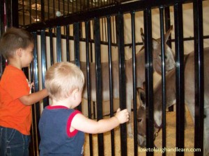 Family Friendly Events: My great-nephew enjoying the donkeys at the Indiana State Fair.