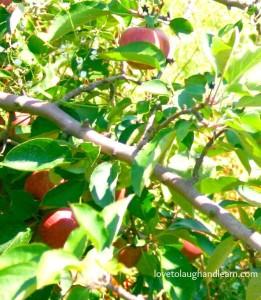 Family Friendly Events: Apple Tree